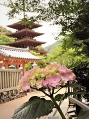 花のある風景 長谷寺 塔と
