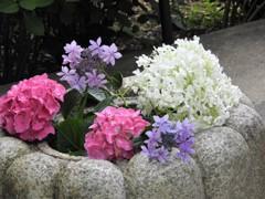 おもてなしの花