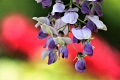 花の季節が
