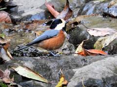 鳥さん 横顔