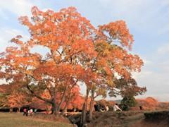 それぞれの秋♪