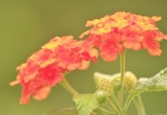 庭の花 寄せ植えから