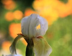 花弁の向こう側
