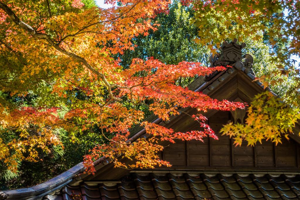 白石神社の紅葉-1