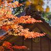 杉山白石神社-6