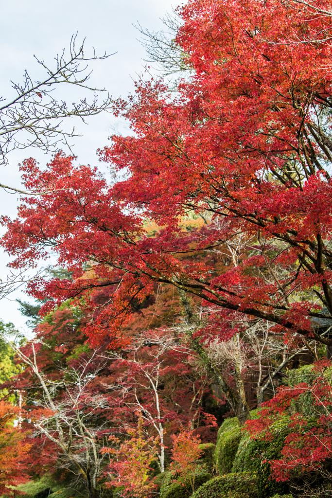西渓公園モミジ並木