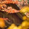 杉山白石神社-7