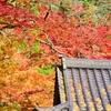 杉山白石神社-8