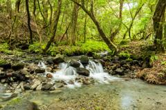 山吹水源からの渓流