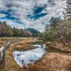 冬を迎える湿原
