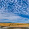 干拓地の麦秋