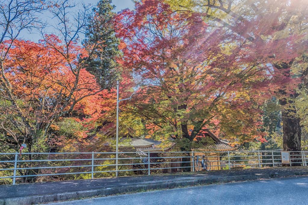 杉山白石神社-2