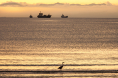 鳥と貨物船