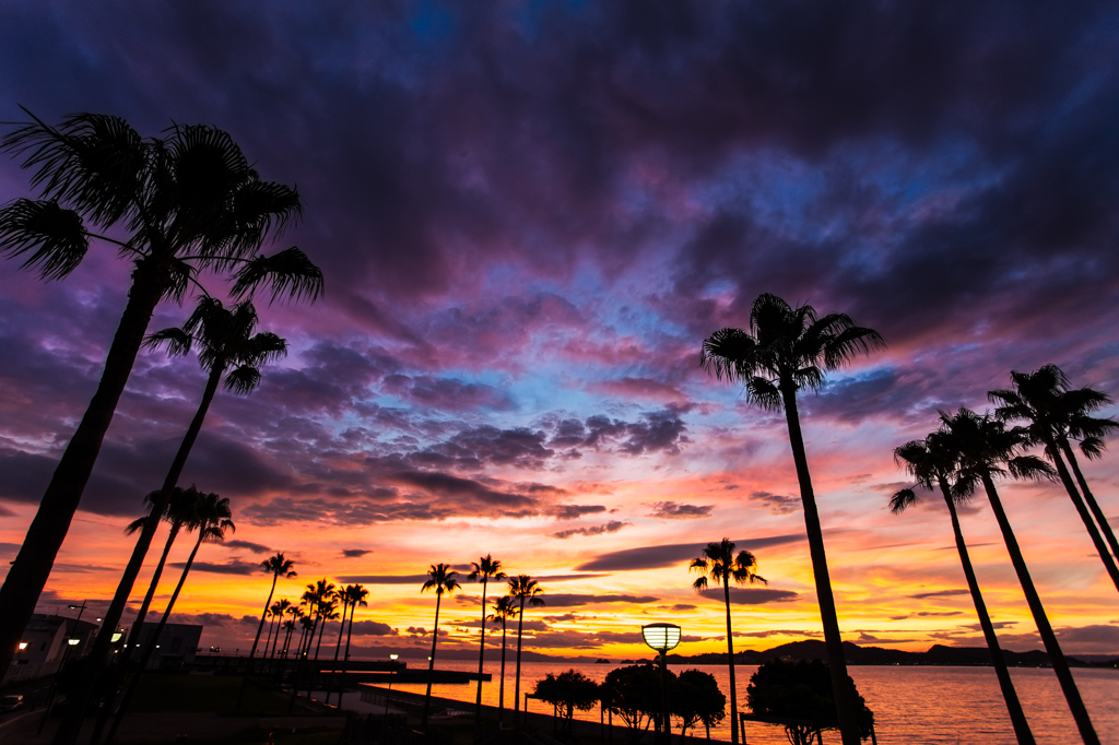 Palm tree in the sunset #2