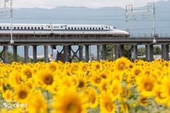 新幹線コラボ