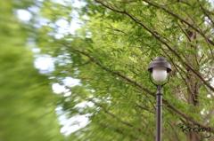 流れゆく街路樹