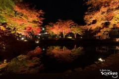 晩秋の美しさ