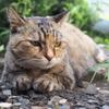 愛猫・たわし35