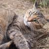 愛猫・たわし37