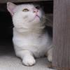 白猫・めい君 17