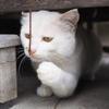 白猫・めい君 15