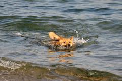 お、溺れる・・・