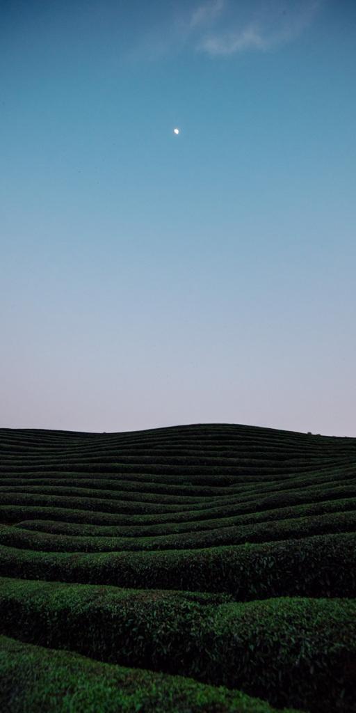 お茶畑と天の川