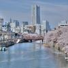 大岡川の桜 HDR