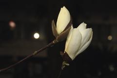 明日いっしょに咲こうね