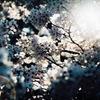 春ノ記憶 #5