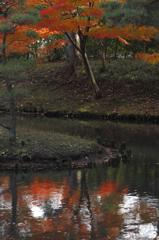 錦秋の横浜三渓園1