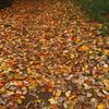 紅葉散歩道8