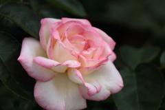 ピンク系3