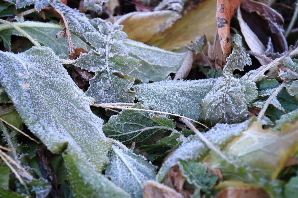 霜降りる1