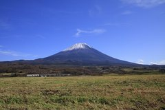 牧草地からの富士