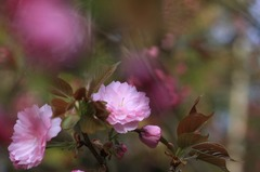 春の瞬き1