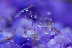 水玉の詩 ( 3 )