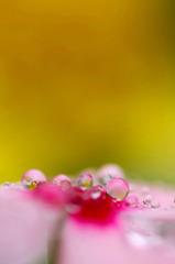 水玉の詩 ( 2 )