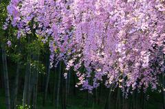 里山の春色