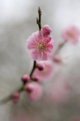 ういういしい春