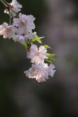 春の瞬き2