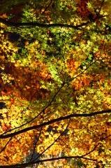 散歩道、秋色のカーテン