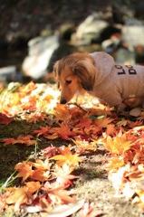 ブルーナ・ボインの秋