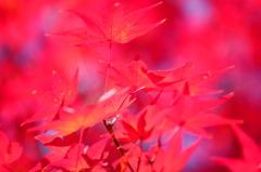 弥勒の里、マゼンダの秋