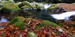 菊池渓谷の紅葉