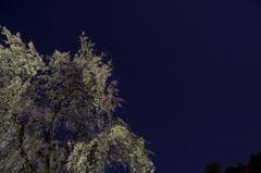 しだれ桜と北斗七星 3