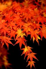 秋映え_08