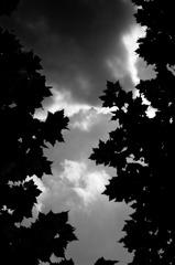 夏と秋の間