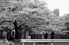 2016年04月02日_東中野