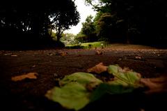 蚕糸の森公園2